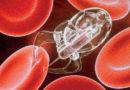 Nanobots que buscaran eliminar tumores